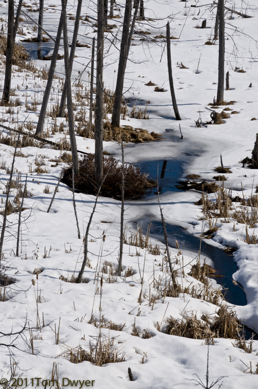 Then there's a stream meandering through a winter marsh.