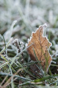 I love the frost around the leaf's edges.