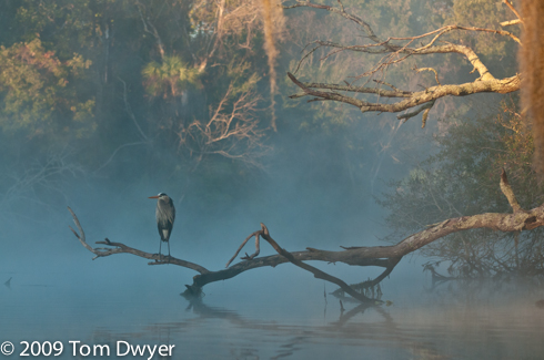 """Blue Heron Hunting"" was a NANPA Showcase Tier 111 winner and as such will appear in NANPA's annual edition of Expressions."""