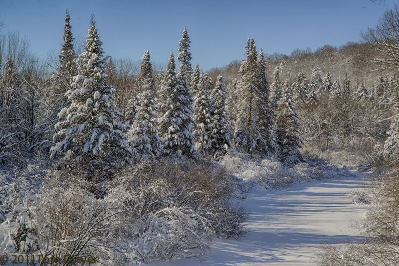 Snow covered spruce trees along an Adirondack River are a favorite subject of mine.