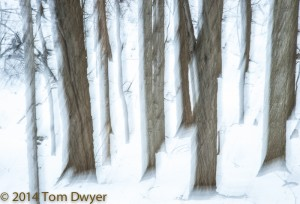 """Winter in """"the Woods,"""" mysterious yet peaceful, quite and inviting."""