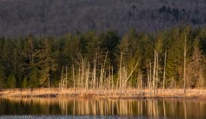 Shaw Pond by Doug Harvey