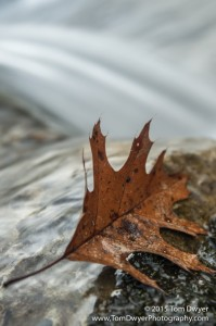 There were other efforts, but ultimately I settled on making the leaf the primary focal point with the falls in a supporting role.