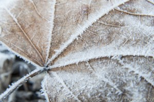 I took an angle on the leaf to accentuate the veins fanning throughout the image . . . leading my eye to expore.